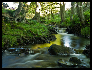 A North Yorkshire stream | by gazjeavons