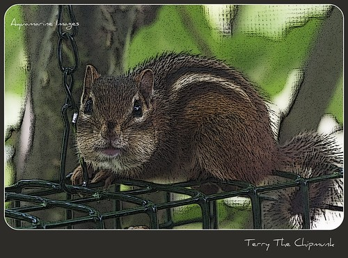 Terry The Chipmunk... | by Aquamarine Images