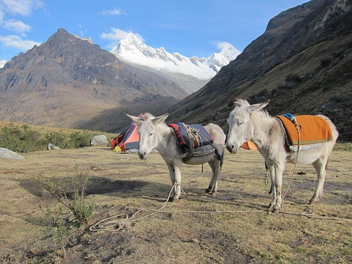 Mules/Donkeys | by fabulousfabs