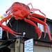 Crab Attack !!