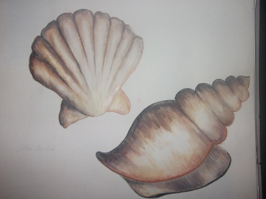 Shells of Drawings catalog photo