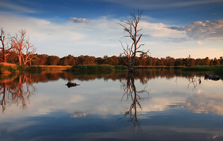 golden Wonga Wetlands | by Celtics24
