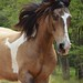 Cavalo.