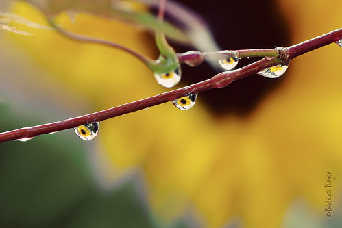 Every drop matters...[Explored] | by Barbara Taeger Photography