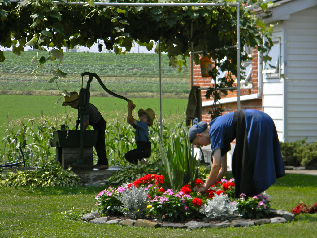 Amish family michelle lavoie flickr for Tending to the garden