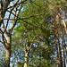 110312-holly-tree