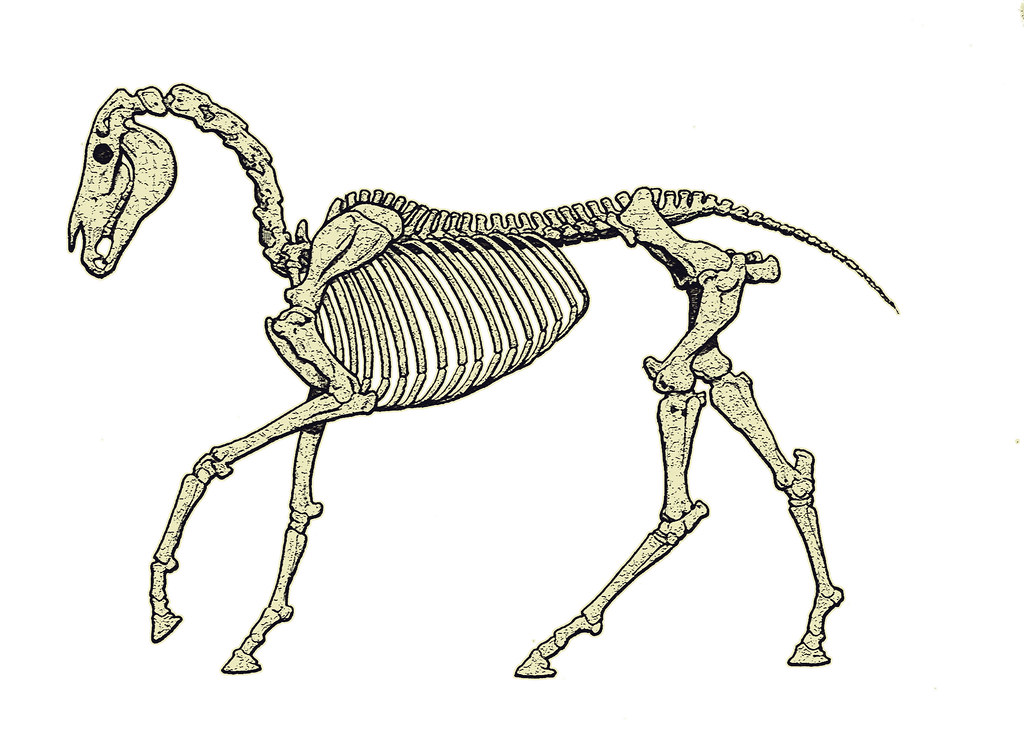 Crafting Bone Skeletal Technologies Through Time And Space