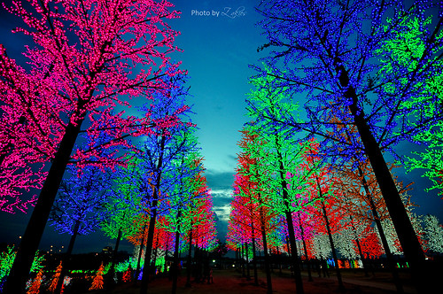 Lights Wonderland | by zakies