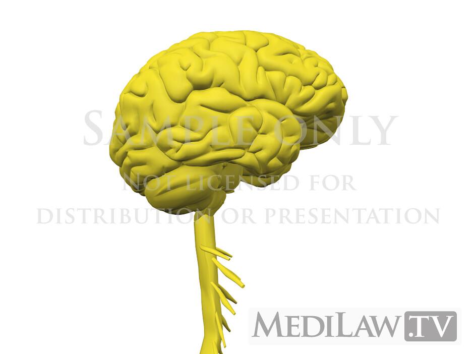 Lawyer 3d Animations Cervical Nervous System Anatomy 01 Flickr