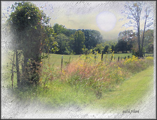 Autumn Fence | by gailpiland