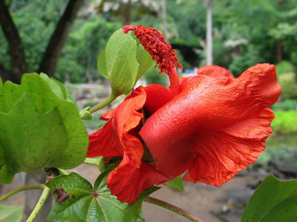 Top 10 hoa hau vn 2014 - 5 3