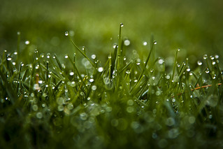 How do you dew bokeh? (EXPLORE #4) | by JasonManion