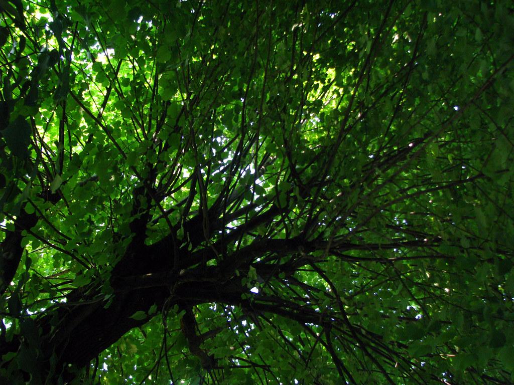 Verde jardines de boboli florencia toscana italia for Jardines boboli