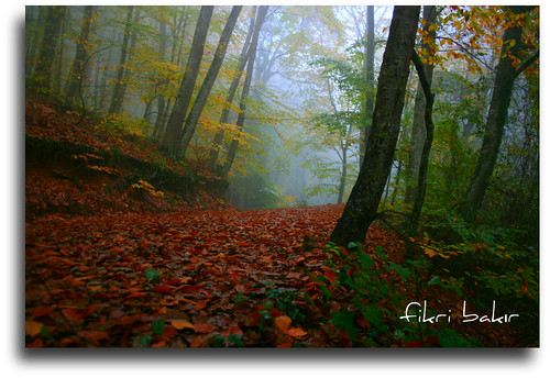 Walking is different in November. (On Explore : 05 / 11 / 2011 ) | by nature photographer.