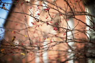 fort-green_brooklyn_autumn_14.jpg_effected | by Making Magique