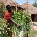 Bag gardens in eastern Uganda