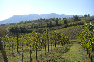 The Vineyard Kitchen Menu