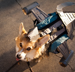 Serenity Halloween Corgi | by kristenmoss