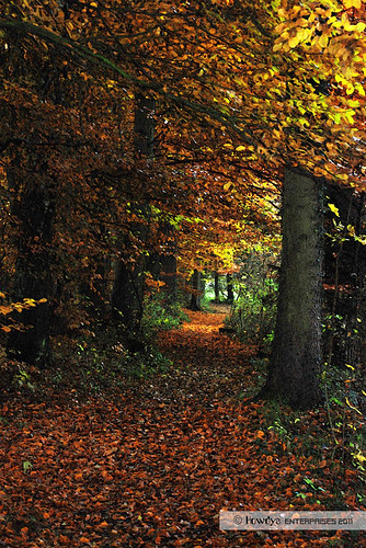 Herbstspaziergang / autumn walk | by Howdys