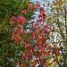 Autumn Leaves - Epsom