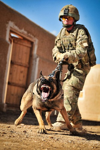 Dog Handler Training Canada