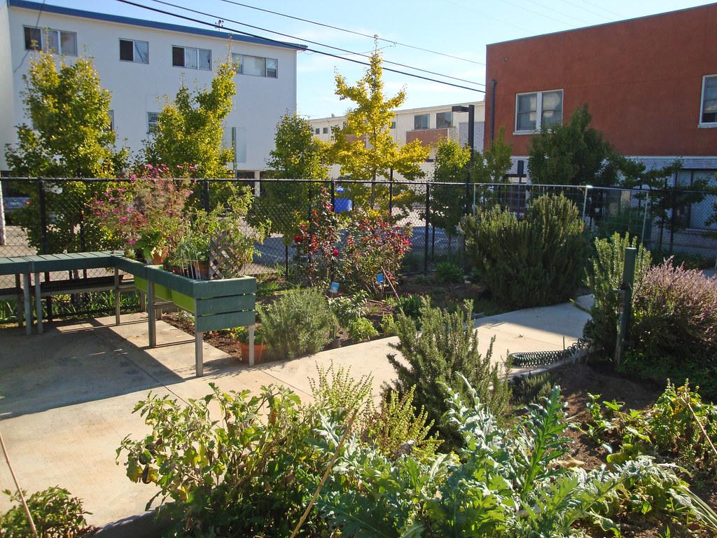 ... City Of Santa Monica Euclid Park Community Garden (6) | By Doreu0027s  Community Garden