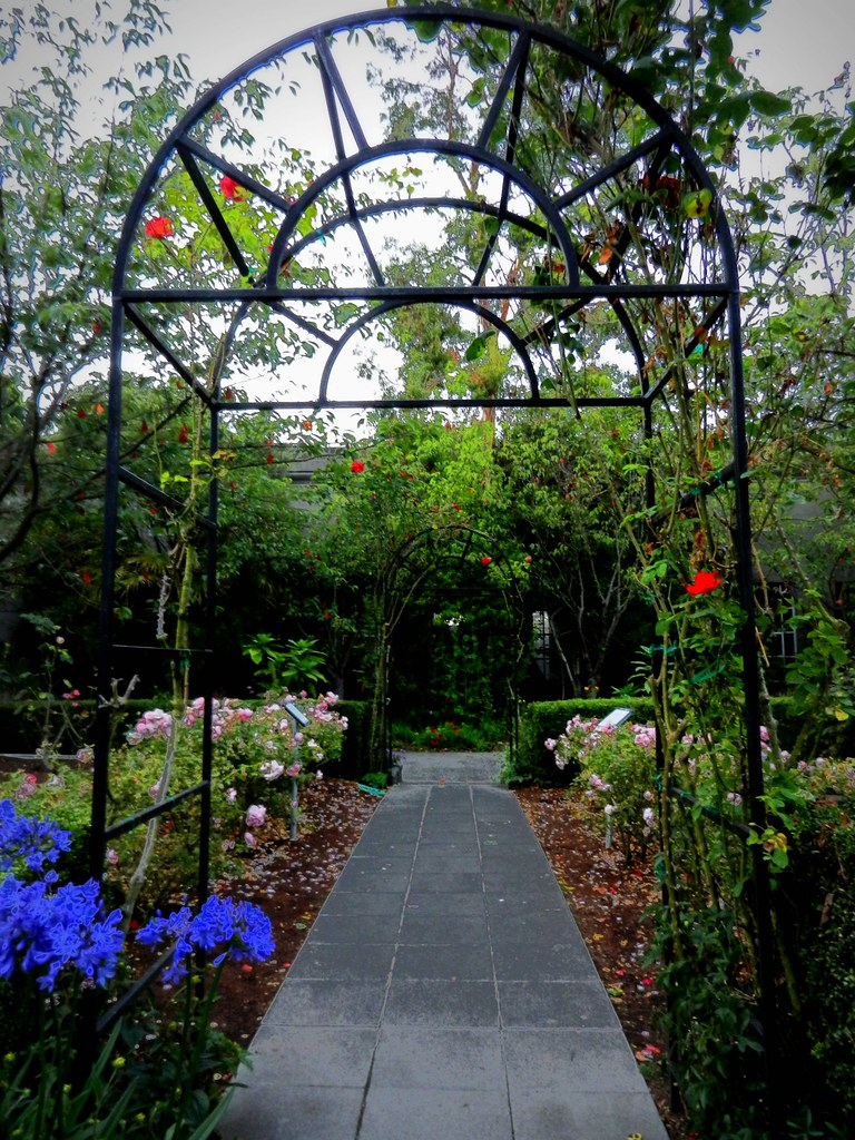 Hiram's garden path, metal sun arch, rose garden, rose arc… | Flickr