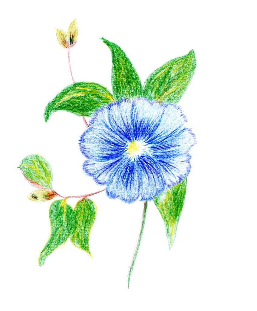 Clipart Blue Flower Drawn With Coloured Pencil Clip Art Th Flickr