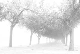 Foggy Day I | by Fran_Diaz