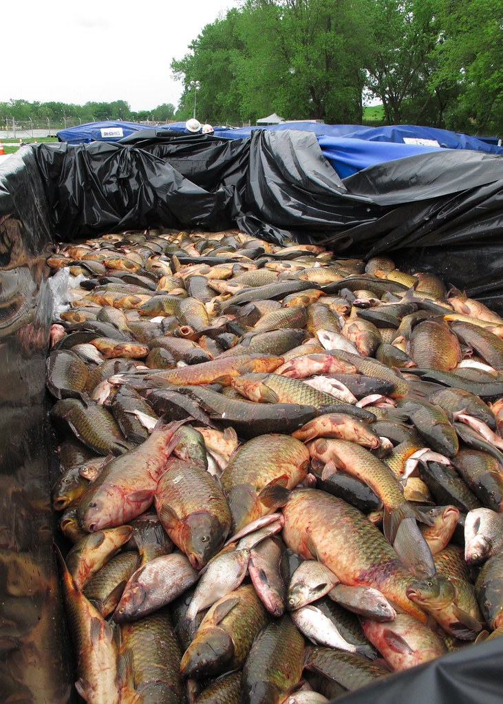 May 22, 2010 Fish Sorting Operations | LANSING, Ill., -- Fis… | Flickr