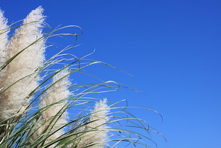 Fluffy Grass (A Vacation Photo Series!) | by PaPeR.cLiP