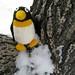 Mr. Penguin in a tree