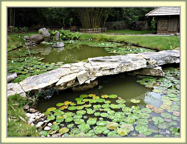Puentes japoneses jardin botanico lankester flickr for Jardin lankester