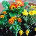 [84/366] Flower Pot on Patio