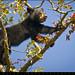 Black Bear Cub - Cade's Cove Great Smoky Mountains