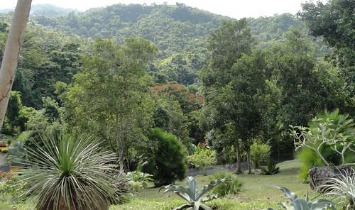 Finca caguas puerto rico jardin boricua flickr for Jardin xanadu puerto rico