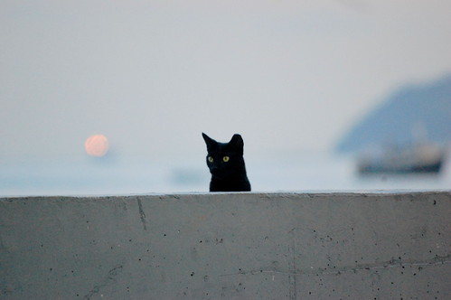 Black Cat Filling Stationcolwyn Bay