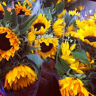 sunflowers in the ran | by ornithes
