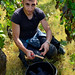Burgundy Grape Harvest 2011