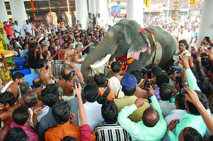 Male Asian Elephant Elephas Maximus Thrikkadavoor Sivaraju At Travancore Devaswom Board Tdb