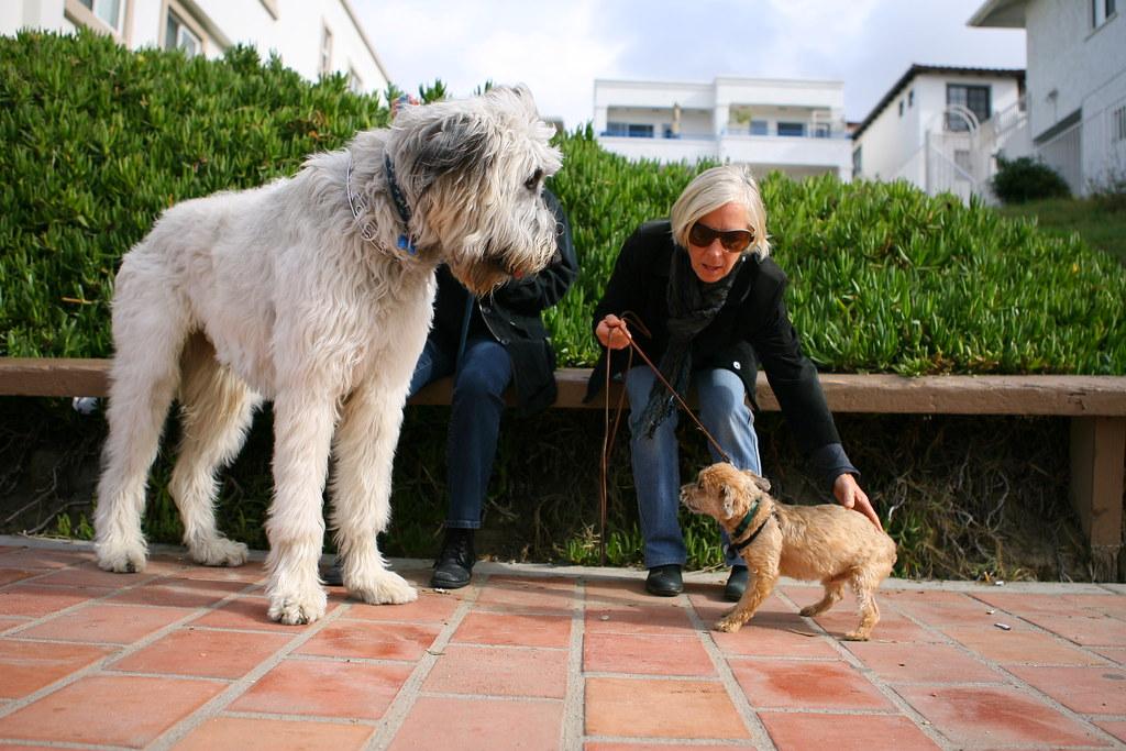 Free Standing Dog Gate  Width