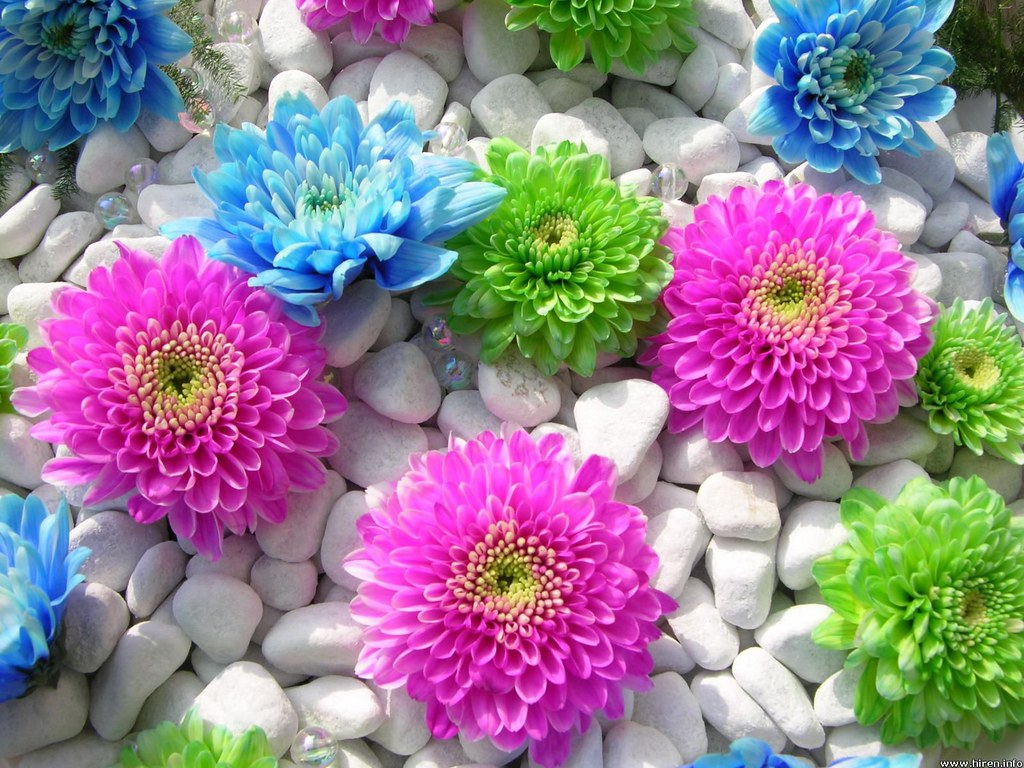 Desktop flower wallpaper beautiful flower desktop for Where can i purchase wallpaper