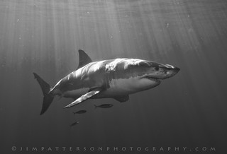 Please Read and Sign the Petition! | by Jim Patterson Photography