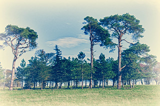 Treeline | by Richard Berry Photography