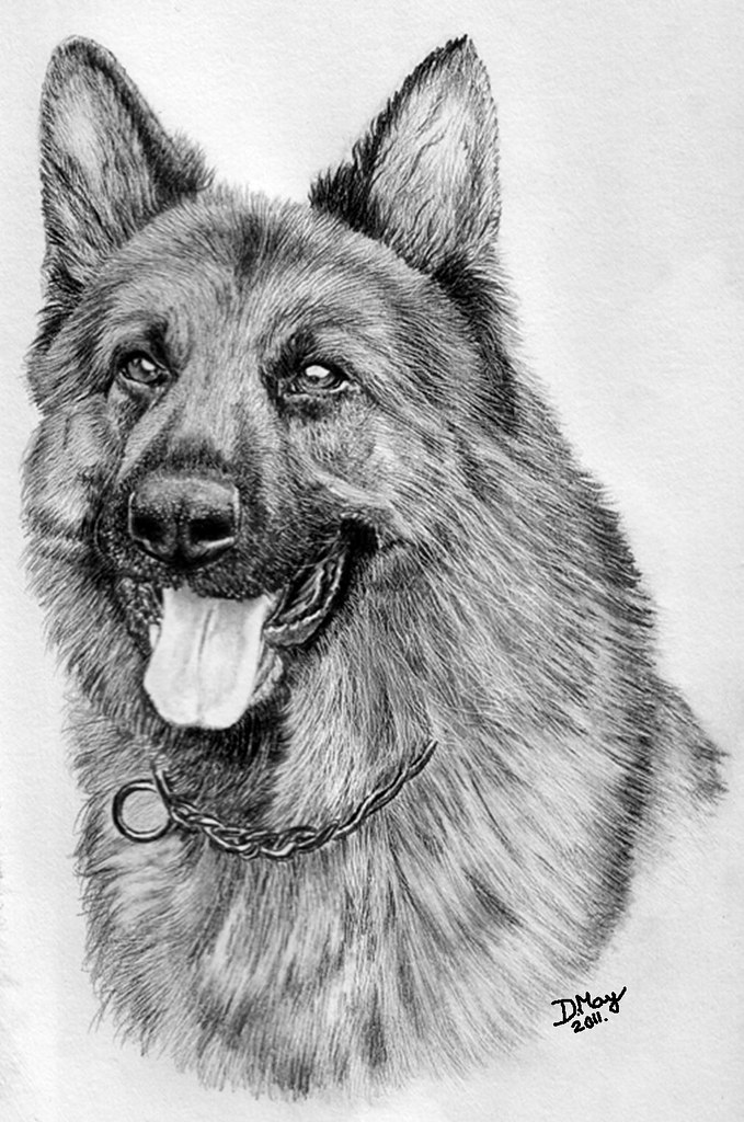 German Shepherd | German Shepherd Graphite on 150 GSM ...