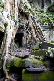 Ta Prohm | by All Things Nature