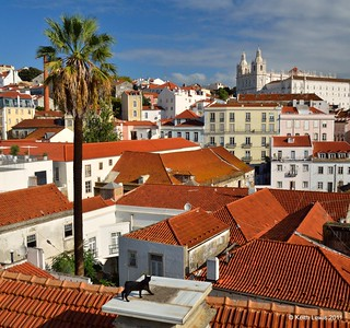 A Cat on a hot Lisbon Roof | by keithhull