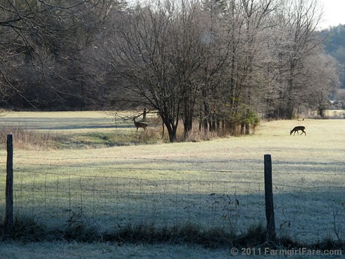 Frosty morning view through the kitchen window | by Farmgirl Susan