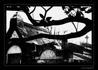 Cemetery Branches | by evangelos K