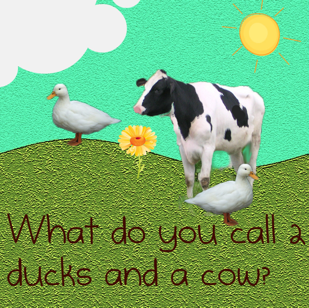 what do you call two ducks and a cow